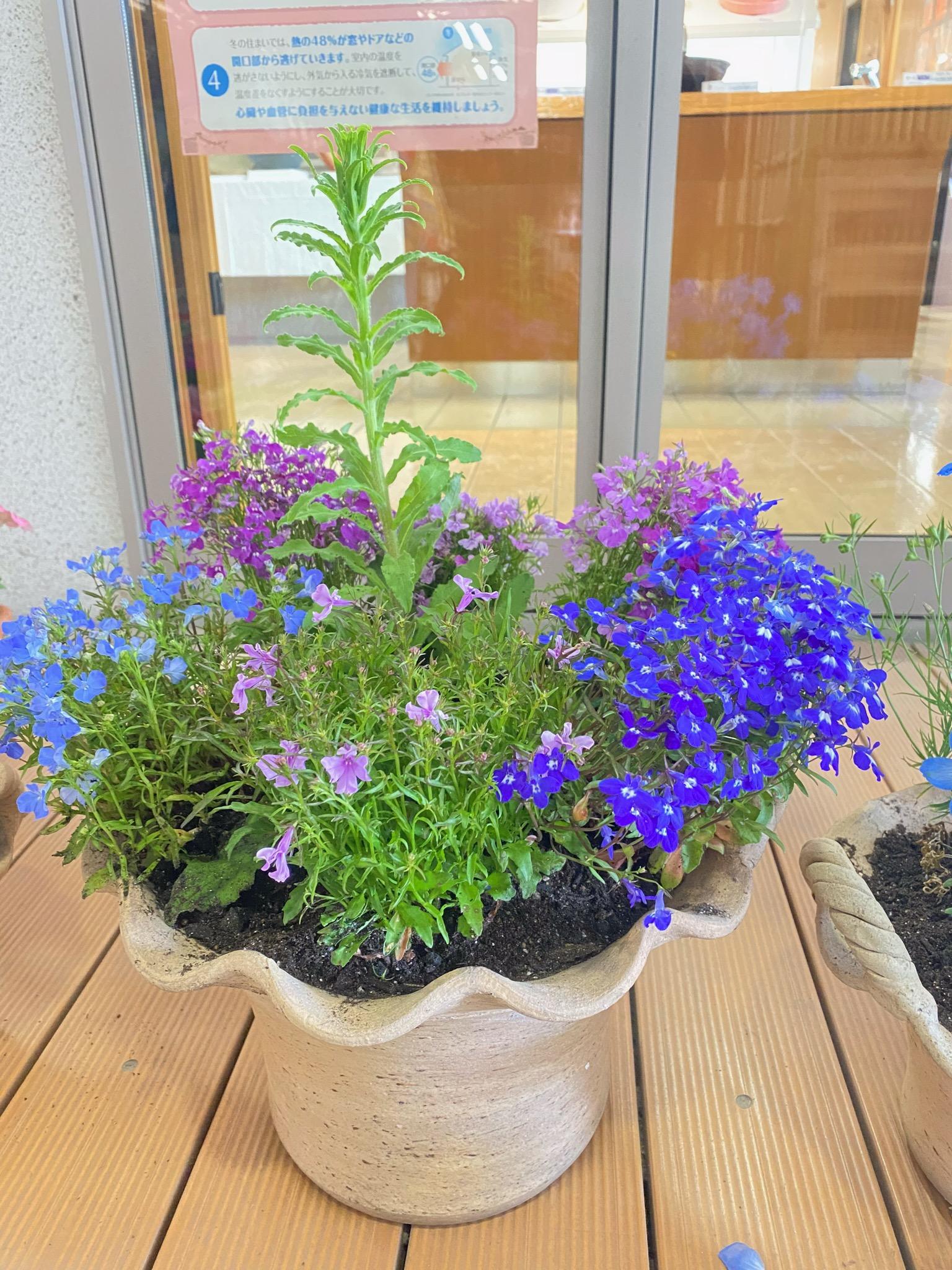 花の寄せ植え教室開催!!